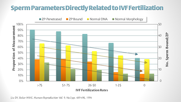 Sperm-Parameters-IVF-Fert